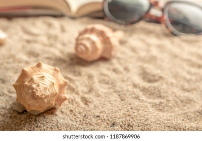 Sea shells on sand with book and sunglasses with warm afternoon sunlight.