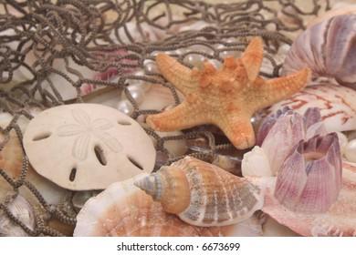 Sea Shells on Sand With Fishing Net, Shallow DOF