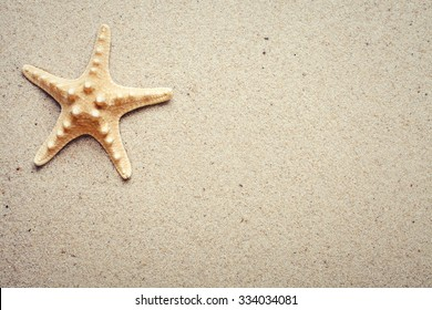 Sea shells on sand. Summer beach background. Top view. place for text