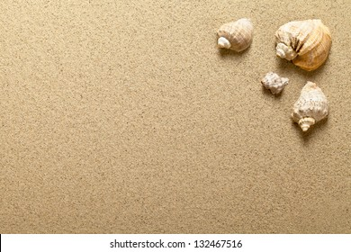 Sea shells on sandy beach. Summer background. Top view