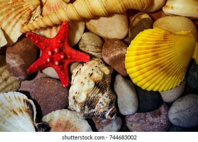 sea shells on the sea stones