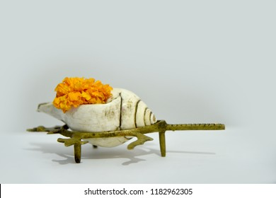 sea shells at puja religious offerings on white background