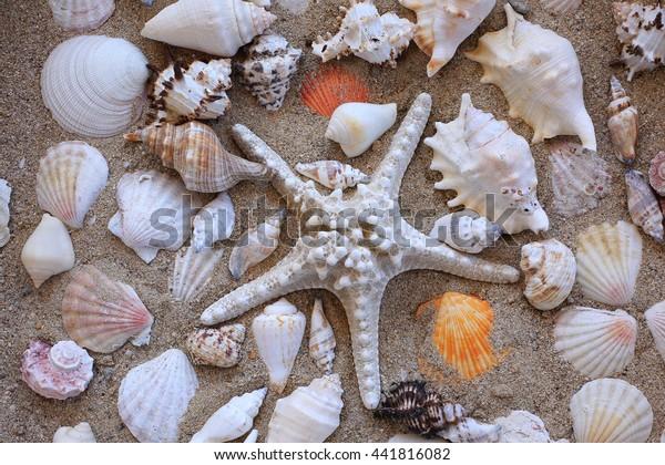 sea shells in sand