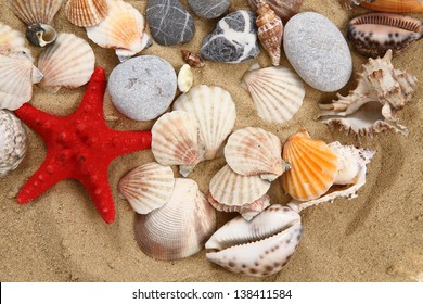 sea shells and sand background