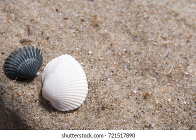 Sea shells with sand background
