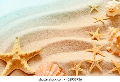 Sea shells with sand as background. Seashells and starfish.