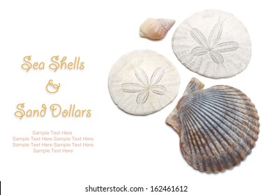 Sea Shells and Sand Dollars isolated on white with easy to remove sample text. Copy space included.