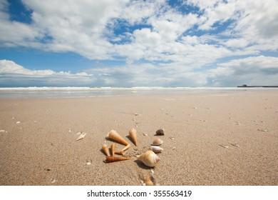 sea shells at sandy shore