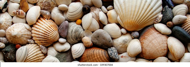 Sea Shells Seashells Panorama - assorted shells / pebbles - background texture.