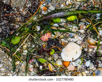 Sea shells and seaweed deposited by the tide on the beach