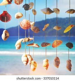 Sea Shells Sea Shore Summer Beach Concept