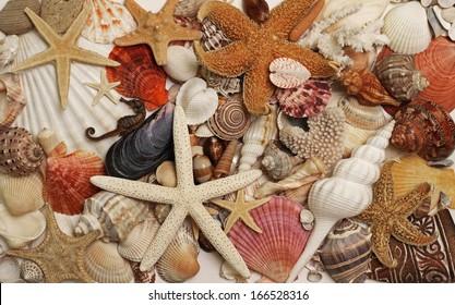 Sea shells and star fish exotic decorative design