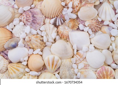 Sea shells and stones background
