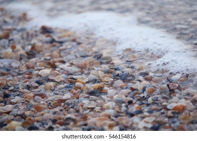 Sea shells and surf foam