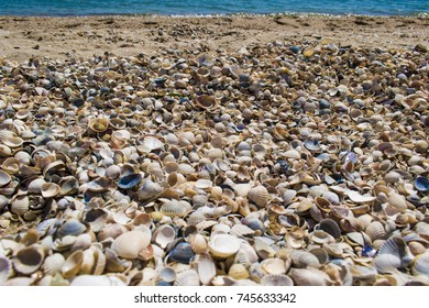 Sea shells texture on the beach with sea view