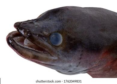 Sea shore fish. Selective focus on the head of an european eel fish isolated on a white background. Macro photograph.