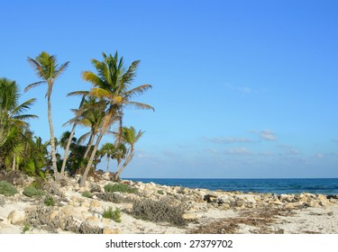 Sea shore with palm trees in the Caribbean