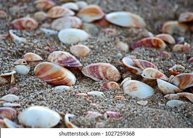 Sea shore Seashells texture
