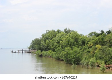 Sea side. Mangrove tree. Mangrove area. Water recreation. Abundant nature area.