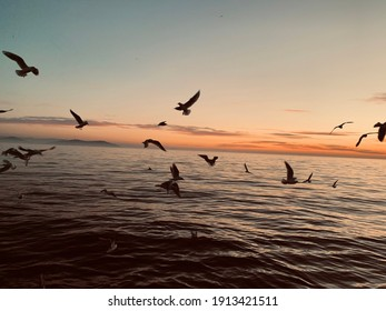 The sea, the sky, the blue, the chirping of the birds, the peace, the landscape.