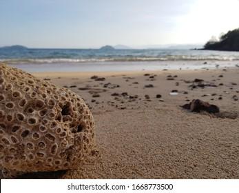 sea sky corel on the beach
