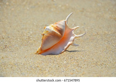 Sea snail on the beach and the sea background