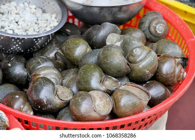 Sea snails on display for sale in a seafood market in Vietnam.