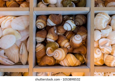 Sea snails and shells as decoration objects