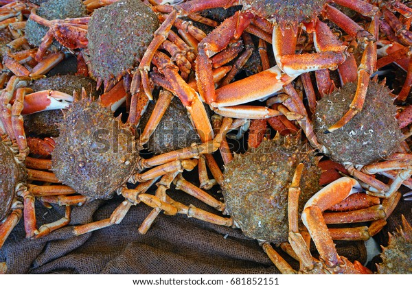 Sea Spider Crab Sale French Farmers Stock Photo (Edit Now) 681852151