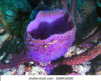 Sea sponge on Medio Reef in Atlantic Ocean