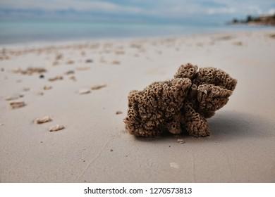 Sea Sponge washed up on Beach in Bahamas