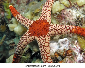 Sea star also called asteroid