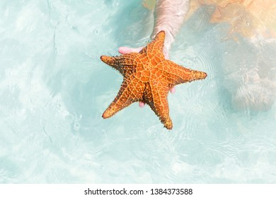 Sea star in hand on crystal turquoise water background. Red starfish in Caribbean sea, copy space