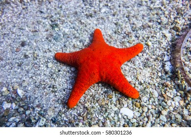 Sea star at Lucky Bay, Western Australia