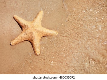 Sea star on beach