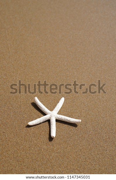Sea star on beach sand