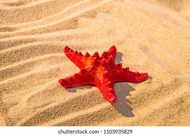 Sea star on a sandy beach