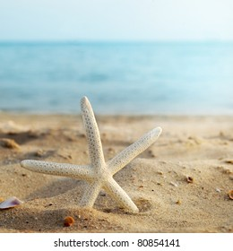sea star in sand beach
