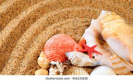 sea star and shells on the sandy beach