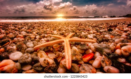 Sea star at sunrise