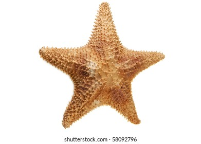 sea starfish isolated on white