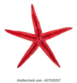 Sea starfish isolated on a white background