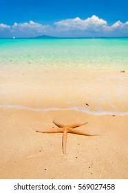 Sea Starlet Five Beams