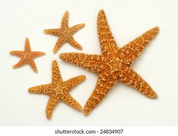 Sea stars on white background