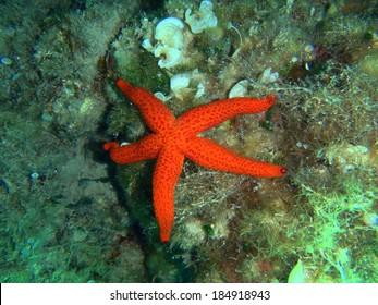 Sea stars in a reef. Colorful underwater landscape shot while scuba diving on Corfu Island, Greece. - Shutterstock ID 184918943