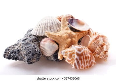 sea Stone and shell  isolated on white background