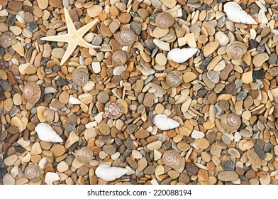 sea stones with shells and star