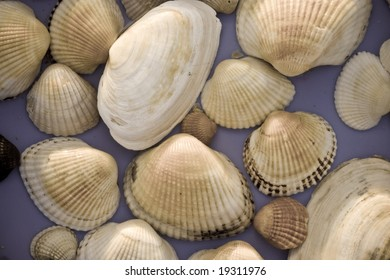sea theme: abstract background of sea shell