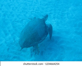 A sea turtle in the Akhziv Canyon area near Nahariya in the Mediterranean diving in clear water above the sand