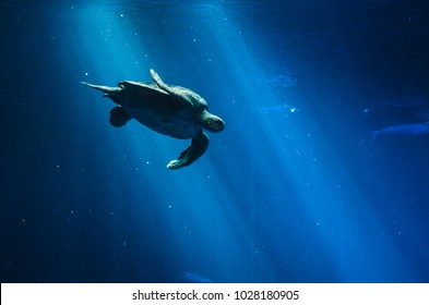 sea turtle in a beam of light